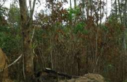 REF: T5739 - Terreno em Atibaia-SP  Bosque dos Eucalíptos
