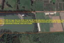 Sitio à venda  em Piracaia-SP - Dos Cubas REF:11805
