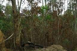 Terreno à venda  em Atibaia-SP - Atibaia Belvedere REF:T5855