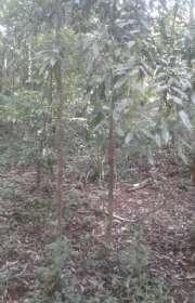 terreno-a-venda-em-camanducaia-mg-bairro-jaguari-do-meio-ref-t5772 - Foto:10